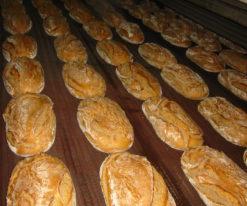 Bread / biscuit